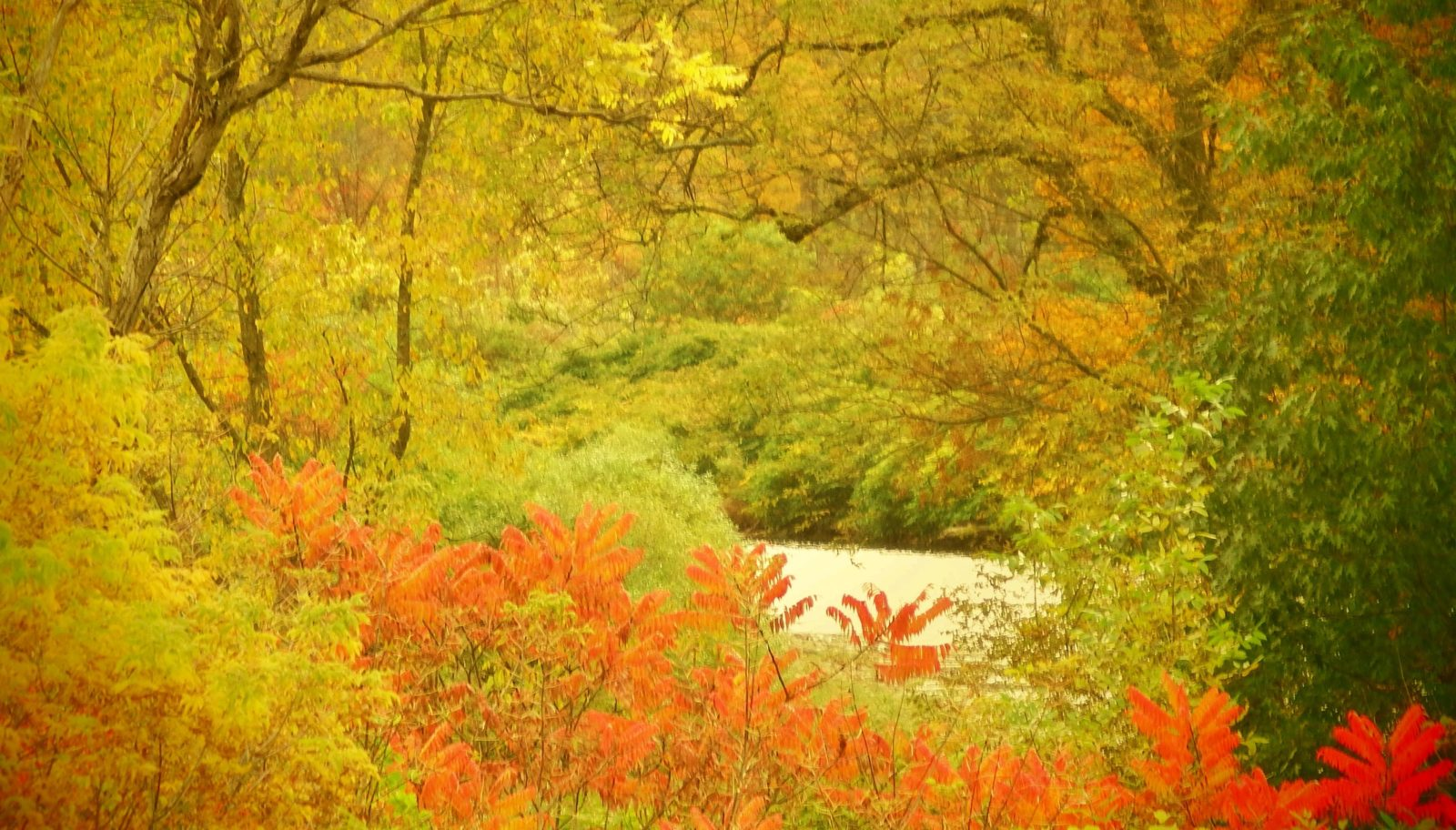 White River in the fall